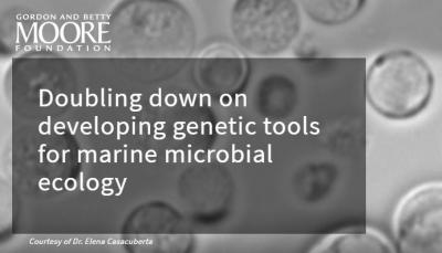 Doubling down on developing genetic tools for marine microbial ecology